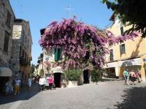 Casa con i fiori viola