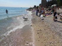 Spiaggetta di Sirmione: il bagno con i cigni
