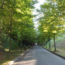 Strada alberata, nei pressi di Parco Callas